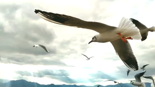 Seagulls and cloud background