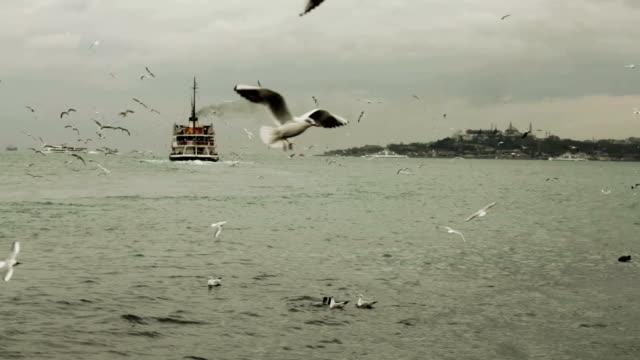 seagulls at bosphorus video