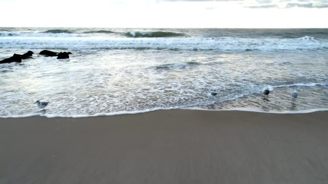 vídeos y material grabado en eventos de stock de gaviotas en la costa - borde del agua