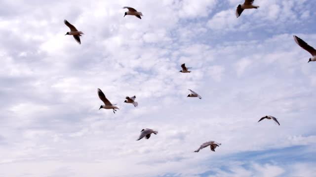 Seagulls Caught Headwind video