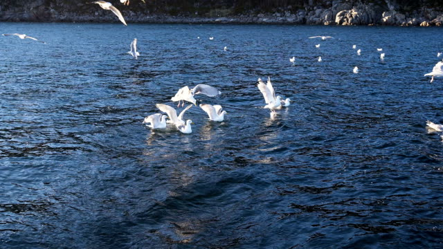 seagulls feeding on water video