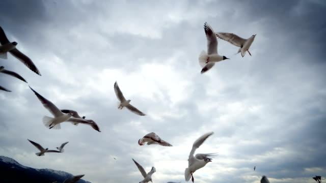 Seagulls fly in sky scene