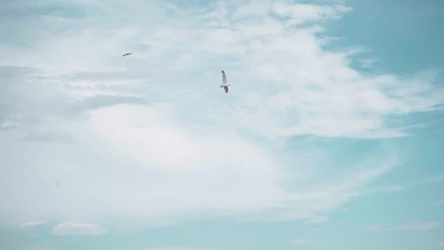 カモメはスローモーションで空を飛ぶ - 鳥点の映像素材/bロール