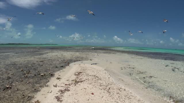 Seagulls fly on the beach