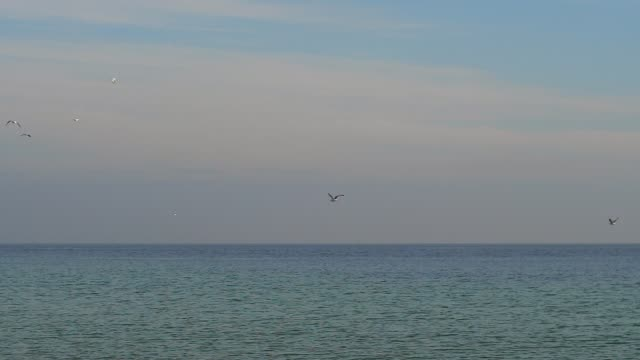 seagulls fly over the sea slow motion video