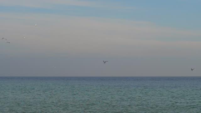 gaivotas voam sobre o mar em câmera lenta - vídeo