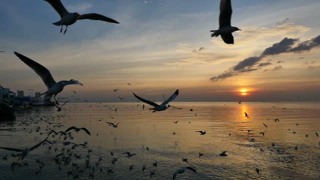 gün batımında deniz uçan martılar. - full hd format stok videoları ve detay görüntü çekimi