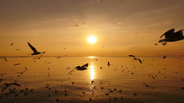 Seagulls Flying Above Sea At Sunset. (Slow Motion) video