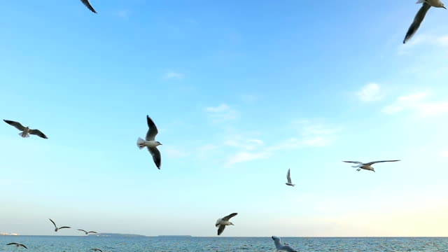 Seagulls flying above the sea Hd slow motion video of beautiful seagulls flying in mid-air on beach above the Mediterranean sea against the blue sky. Large group of sea birds trying to feed. water's edge stock videos & royalty-free footage