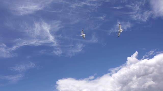 Seagulls flying across the sky video