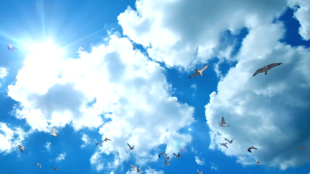 Seagulls flying against beautiful blue sky, panning
