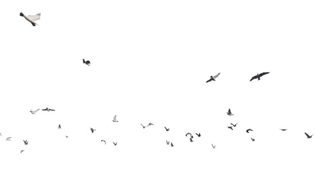 Seagulls flying against white, 4K Seagulls flying against white, 4K seagull stock videos & royalty-free footage