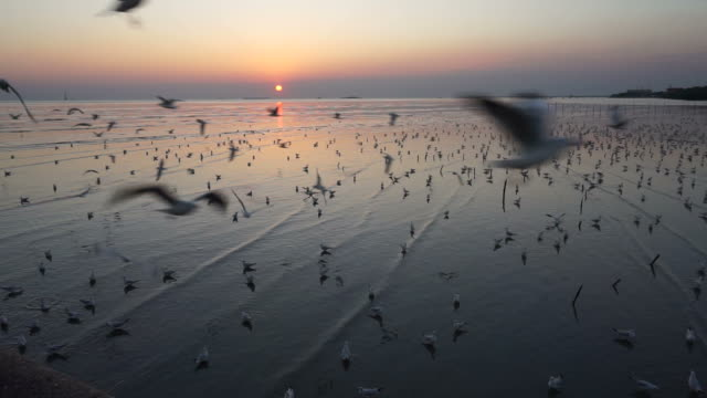 Seagulls flying and sunset. video