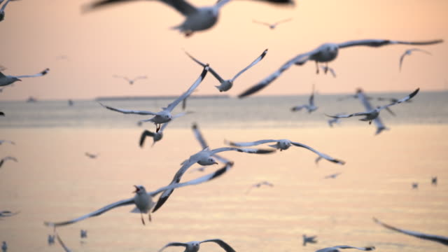 seagulls flying at dusk - antenna parte del corpo animale video stock e b–roll