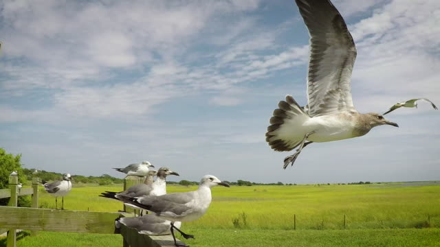 Seagulls Flying Away (Slow-Motion) Seagulls fly in sequence from a fence at a coastal park. wetland stock videos & royalty-free footage