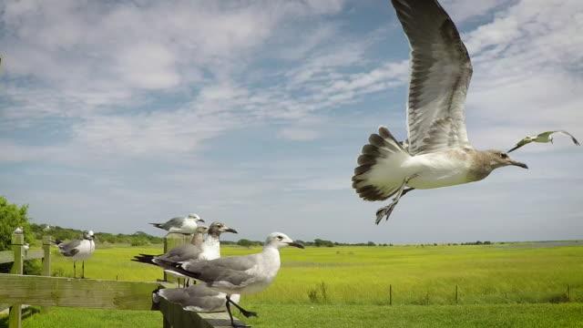 seagulls flying away (slow-motion) - болото стоковые видео и кадры b-roll