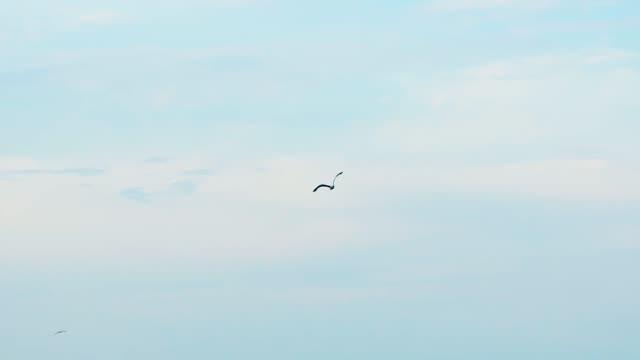 青空を飛ぶカモメ - 鳥点の映像素材/bロール
