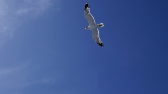 Seagulls Flying in Slow Motion video