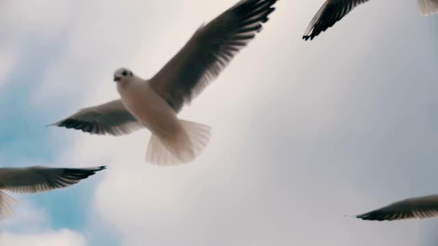 空を飛ぶカモメと青空の背景に食べ物をキャッチ。スローモーション - 水鳥点の映像素材/bロール