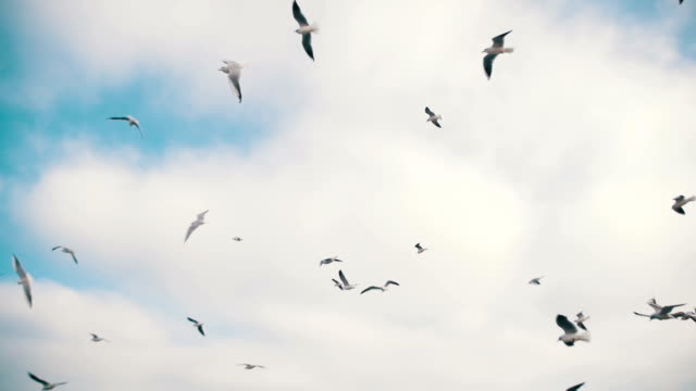 seagulls flying in the air and catch food on blue sky background. slow motion - sussex occidentale video stock e b–roll