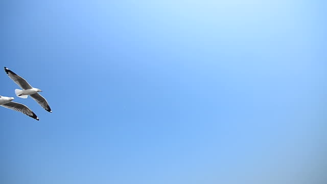 Seagulls Flying on Blue Sky Seagulls Flying on Blue Sky - High Definition Video Format 1080p - Full HD 1920x1080 - 29.97fps seagull stock videos & royalty-free footage