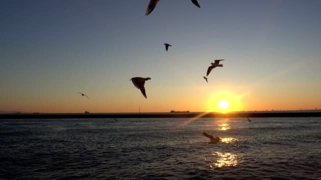 Seagulls Flying On The Sea video shot 4K, downscaled 1080i fishing rod stock videos & royalty-free footage