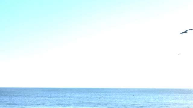Seagulls Flying Over Ocean video