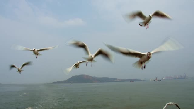Seagulls flying over the sea Beautiful close up shot of seagulls flying over the sea water bird stock videos & royalty-free footage