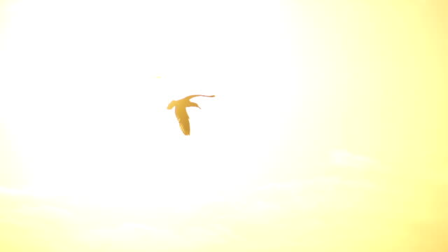 Seagulls flying over the sky at sunset video