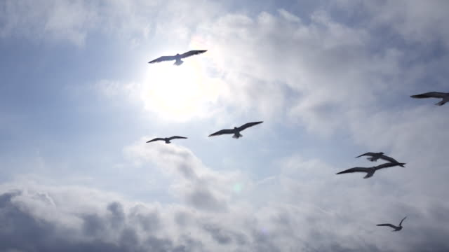 Seagulls Flying over the sun and Blue Sky ビデオ