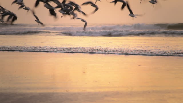 Seagulls Flying Seagulls Flying water's edge stock videos & royalty-free footage