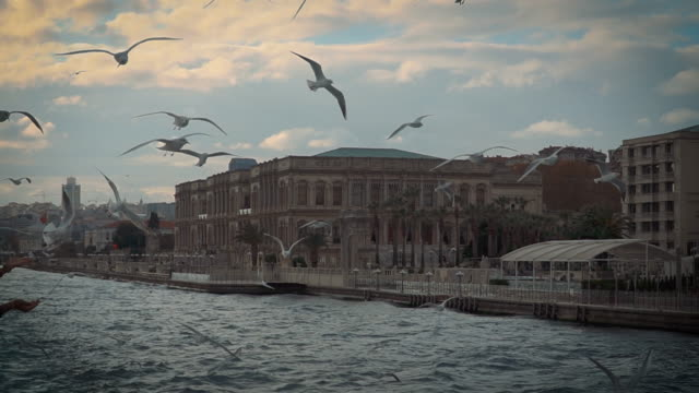 seagulls following ferry - sightseeing istanbul video