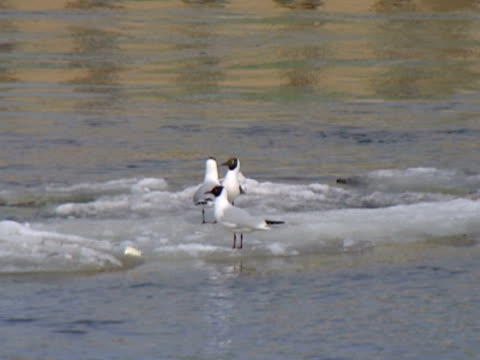 Seagulls in a city. Life of water birds in the big city center. water bird stock videos & royalty-free footage