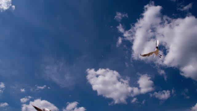 Seagulls in Blue Sky video