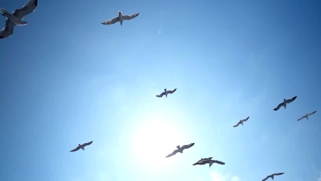 갈매기 비행 - 하늘을 나는 새 스톡 비디오 및 b-롤 화면