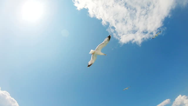 Seagulls in flight Seagulls flying in the sky. seagull stock videos & royalty-free footage