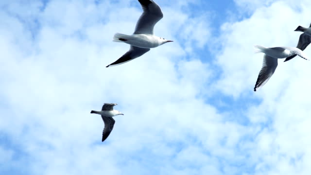 Seagulls in Slow Motion