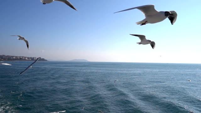 vídeos de stock, filmes e b-roll de gaivotas em câmera lenta - estreito mar