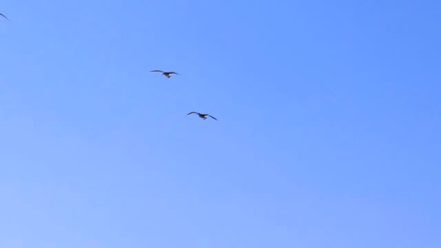 Seagulls in the sky video