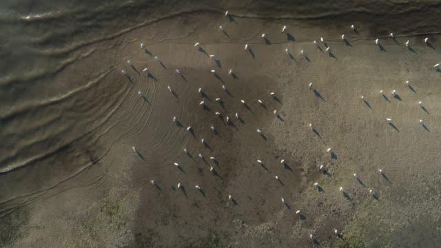 上記から直接海岸にカモメ - 水鳥点の映像素材/bロール