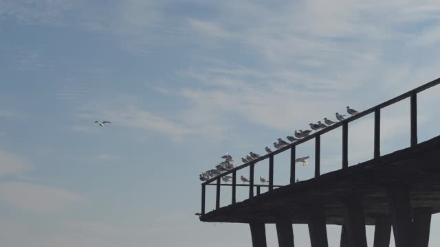 seagulls on the pier slow motion video