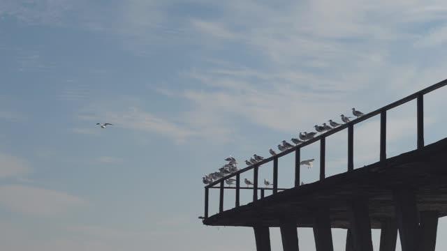 gaivotas no píer em câmera lenta - vídeo