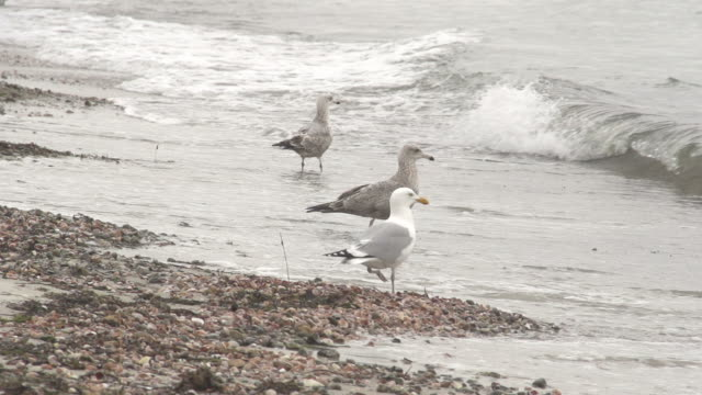 Seagulls Perched on Shore video