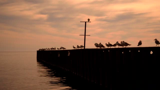 Seagulls sitting on pier. Sea pier with sea gulls at sunset. Seagull pier video