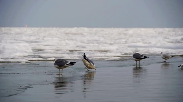 seagulls sitting on the frozen ice-covered sea in winter. slow motion - sussex occidentale video stock e b–roll