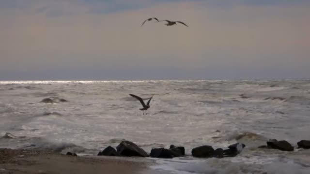 Seagulls Soar Above The Sea
