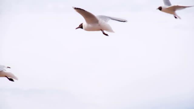 Seagulls Soar in the Summer Sky video