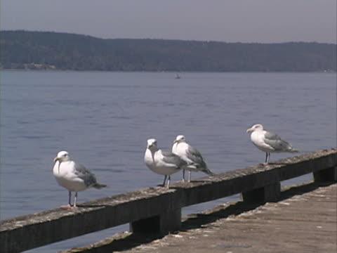gabbiani#1 - uccello acquatico video stock e b–roll
