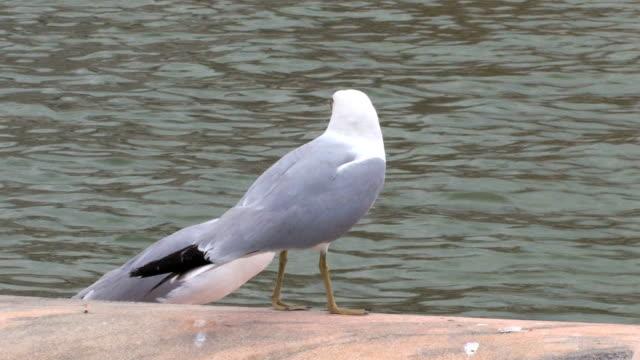 Seagulls video