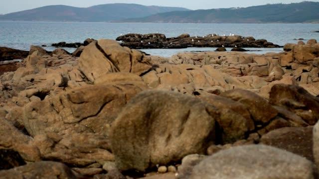 Seagulls waiting near the sea video